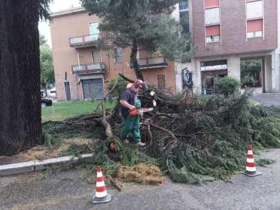 cislago albero caduto 06052018 (2)