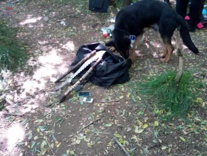 gazebo della droga nel bosco (1)