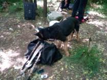 gazebo della droga nel bosco (2)
