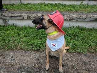mondiali iro cani 23092018 lubiana (10)