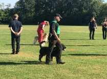 campionato alpini cani da soccorso 2018 cogliate (5)
