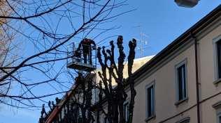 2019-01-15 potature e taglio alberi via roma