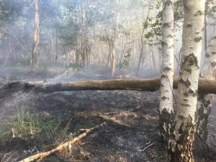 ceriano incendio bosco (5)