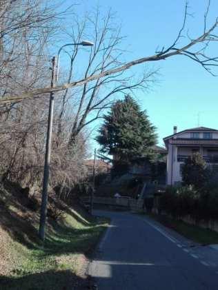 05022020 alberi pericolanti a limbiate (1)