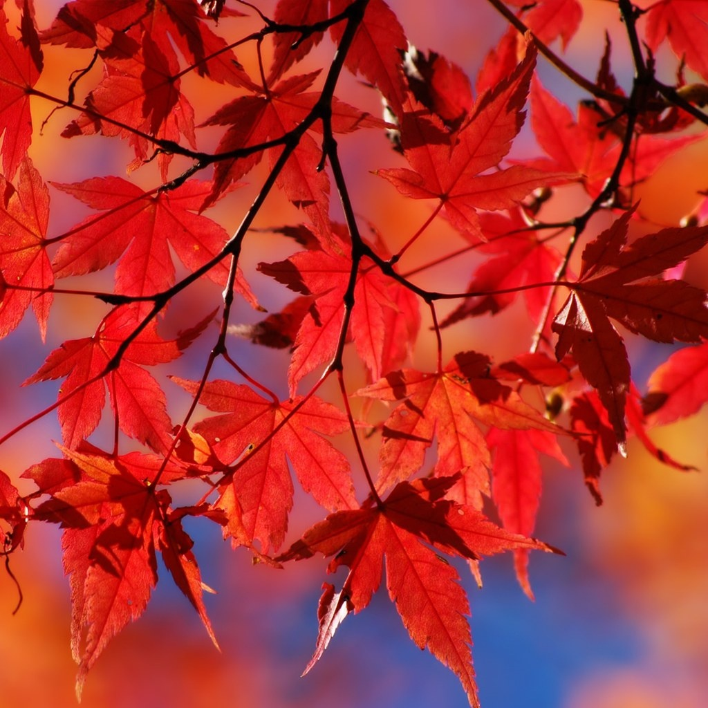 Foglie rosse, frutti d'autunno