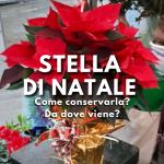 Conservare la Stella di Natale