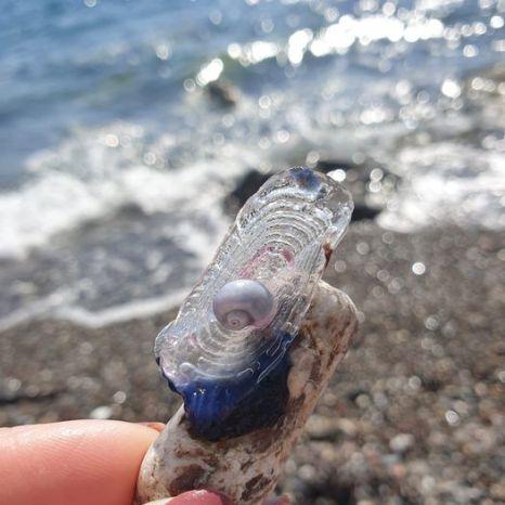 Meduse velelle, Barchette di San Pietro