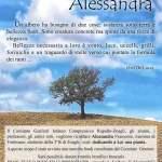 Alessandra Frumento