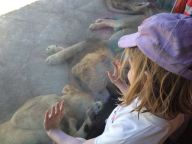 Kylie and the Lions