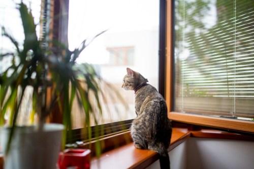 Češi si v době pandemie více pořizují domácí mazlíčky
