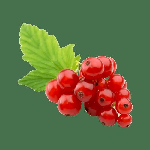 RIBES - IL VERZERATT 1919 - Frutta e verdura a domicilio MILANO
