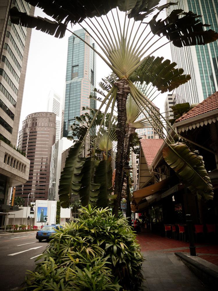 Singapore (15 von 46)