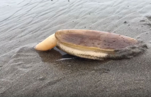 Dünyanın en ilginç avlanma tekniği! Sülünez nedir? Sülünez nasıl avlanır?