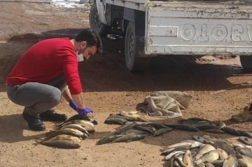 Yumurtlama dönemindeki balıkları avlayanlara 6 bin 400 TL ceza