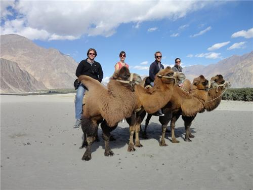 Camel Safari in Leh