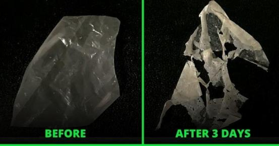 Scientists have created the world's first truly biodegradable plastic that separates in a matter of days