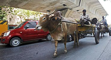 Bullock carts in the middle of metros