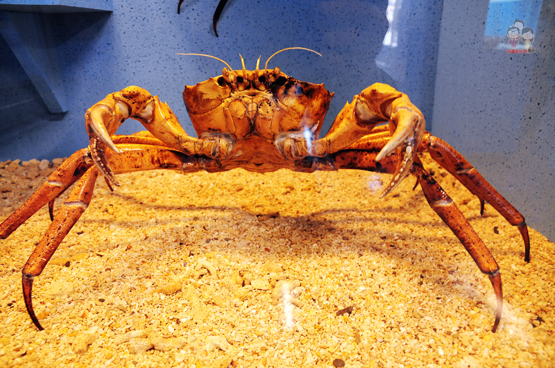 旅行菊島|澎湖北環景點.竹灣螃蟹博物館、綠蠵龜常駐的大義宮