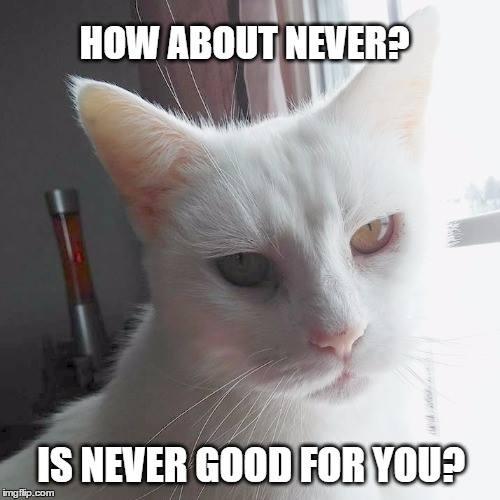 snarky cat