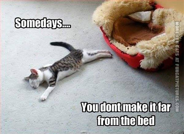 sleeping cat meme