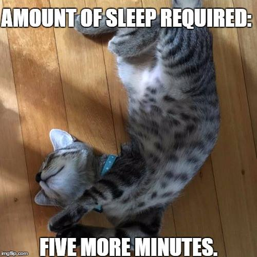 sleepy kitty meme