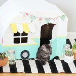 Cardboard Furniture for Cats