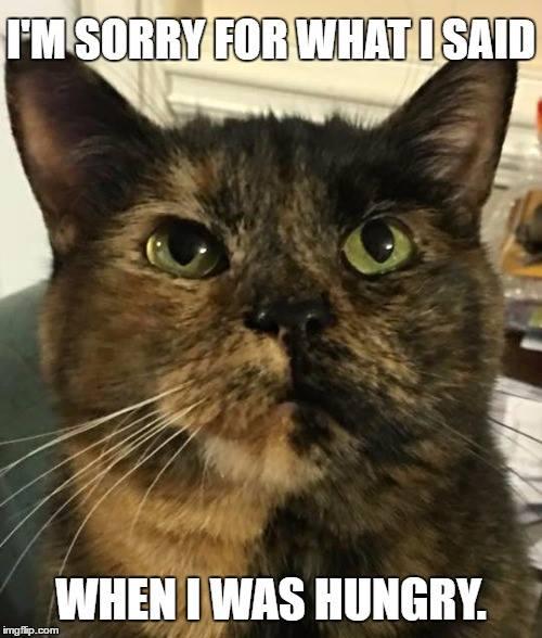 comical cat memes