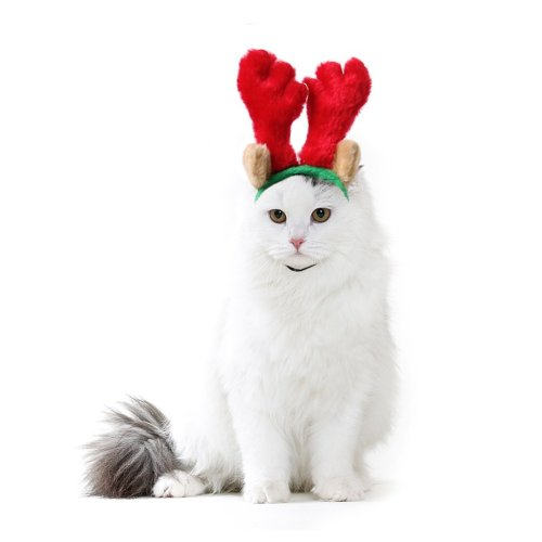 cat Christmas outfit