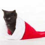 cat Christmas stocking stuffers