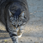 How to Care For Your Pregnant Cat