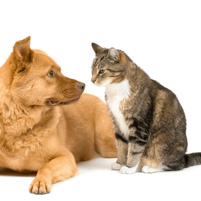 #CrazyCatLady #CatandDog #CatCare how to introduce a cat to a dog