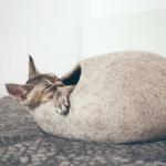 #CrazyCatLady #CatCare #CatComfort