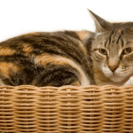 #CrazyCatLady #CatComfort #CatBeds