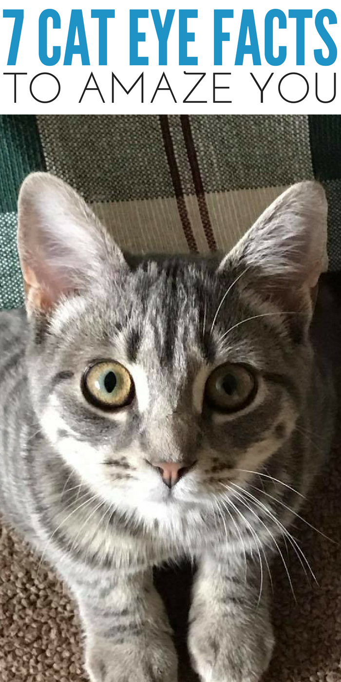 #CrazyCatLady #CatEyes #CatFacts cat eyes