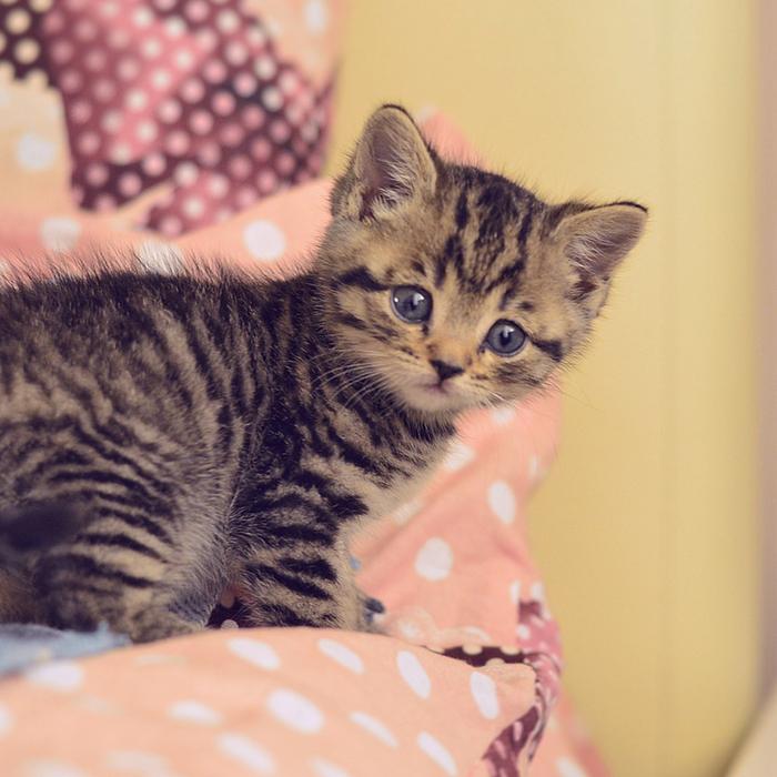 #CrazyCatLady #CatTreatsForKittens #KittyTips cat treats