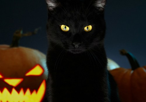 #CrazyCatLady #HalloweenCat #DangersAtHalloweenForCats