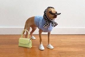 Boobie Billie, Instagram's Most Fashionable Dog | HYPEBAE
