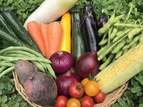 【野菜の福袋】ベジLIFE!!おススメ☆夏のカラフル野菜セット(10種類)