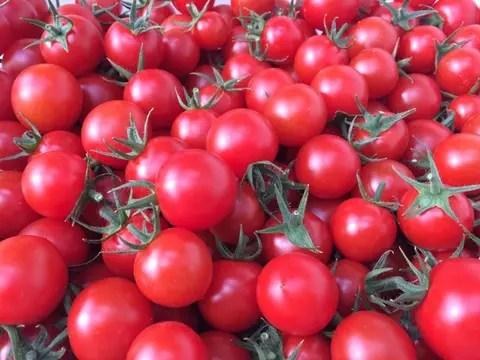 【野菜の福袋】\幻のトマト/福袋限定の特別セット