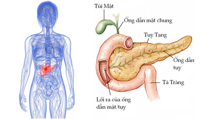 Image result for tuyen tuy