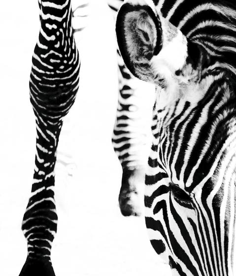 Animal Berlintapete