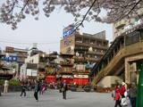 犬山駅西に車山が集合しています