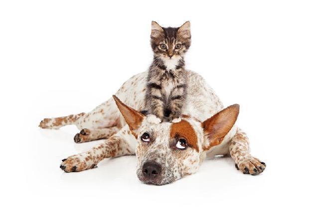 cachorro-com-gato
