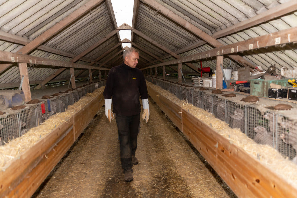 Mink farm owner Holger Rønnow in his farm, where he is forced by the Government to mass cull all minks on November 6, 2020 in Herning, Denmark.
