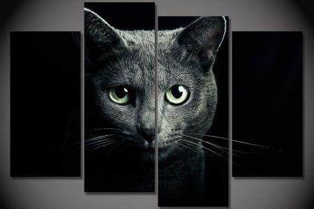 wallpaper animals blue eyes nose whiskers black cat siamese cat animals blue eyes nose whiskers black cat siamese cats eye cats mammal x px vertebrate black