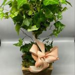 Large Canadian Ivy Topiary New Milford Florist Enza Events Local Flower Delivery New Milford Ct 06776