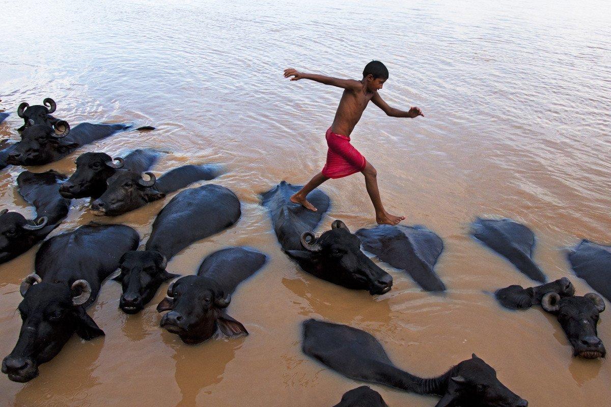 benaras-india-kid-jumping-bull-ganges-river-nikon-d90-nikkor-18-105mm-sandipan-majumdar.jpg (혐) 인도인들의 성수 겐지스 강 실태.jpg