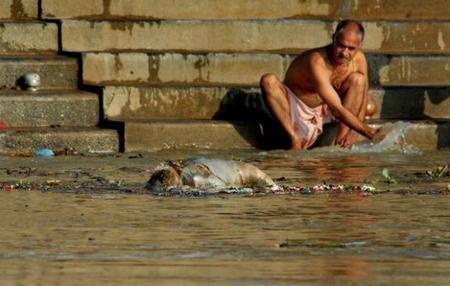 8583609_orig.jpg (혐) 인도인들의 성수 겐지스 강 실태.jpg