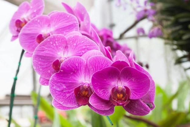 Mariposa descolorada púrpura floral del jardín al aire libre Foto gratis
