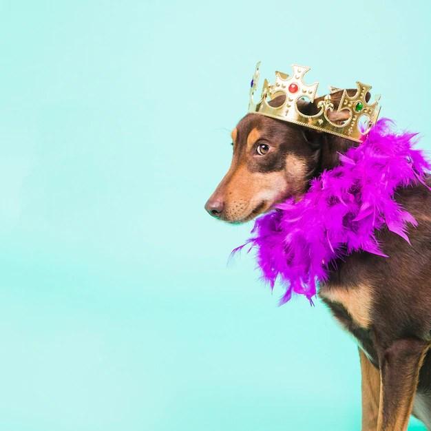Cão com coroa e plumas em fundo azul
